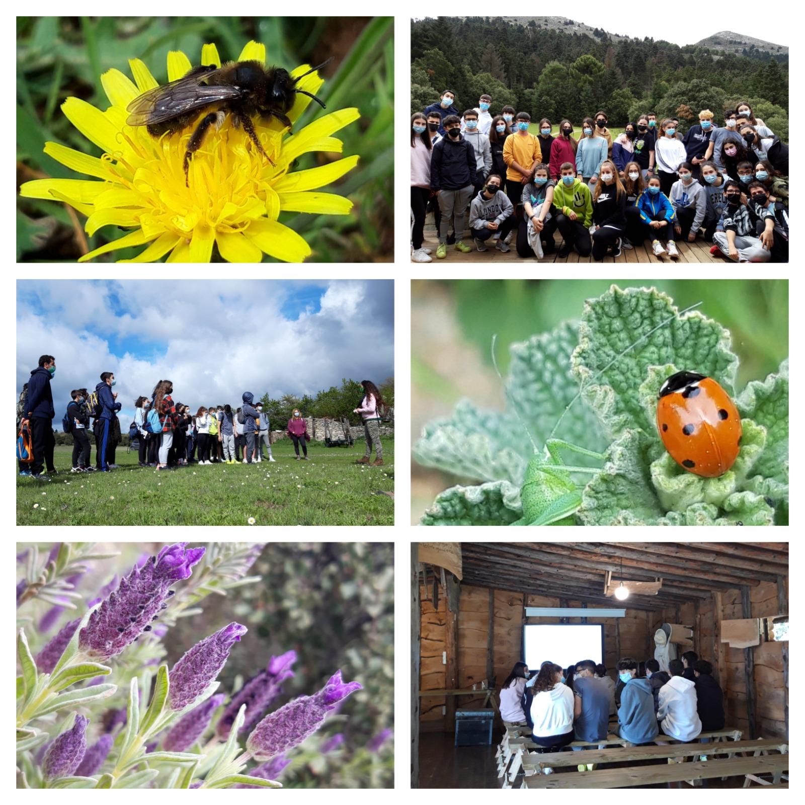 Bosque Escuela: Sierra de las Nieves